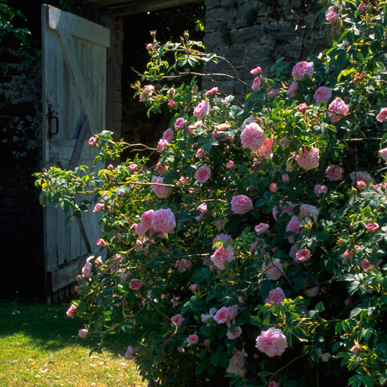 Country Garden Decorating Ideas Lovely Photograph classic