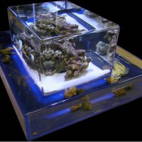 ZeroEdge Aquariums by Jenni Chasteen