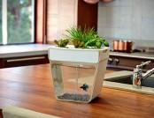 Aquafarm by Kickstarter
