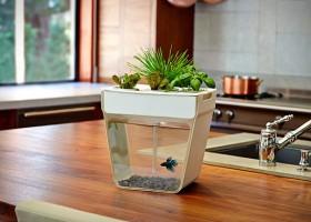 1-aquafarm-by-kickstarter