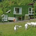 4-goats