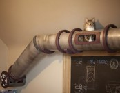 Creative Spaces Designed for your Cat