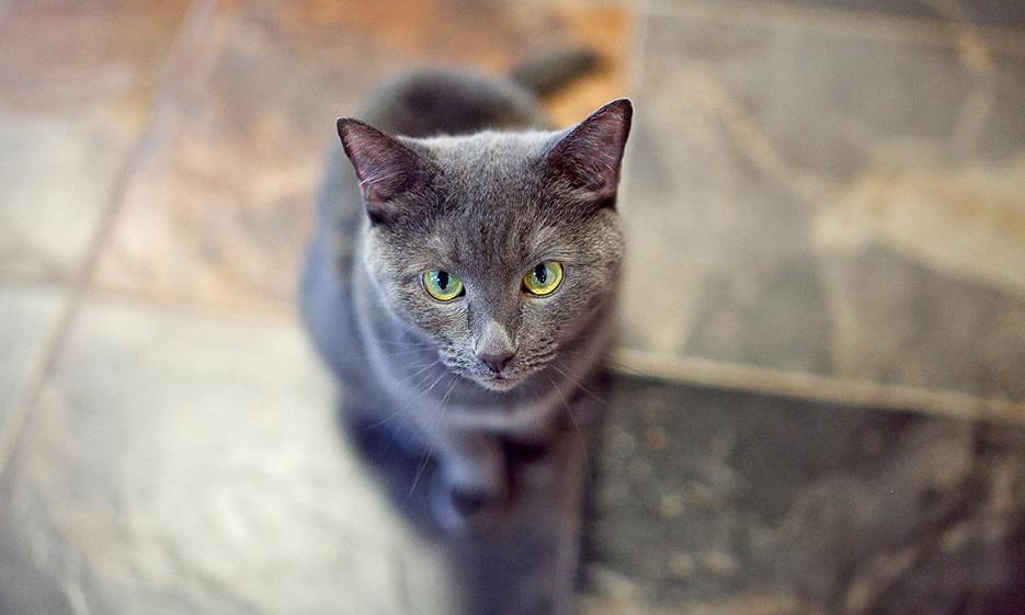 16-cat