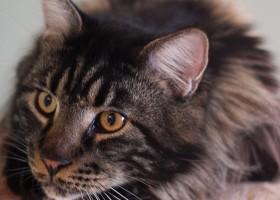 33-Fyodor cat