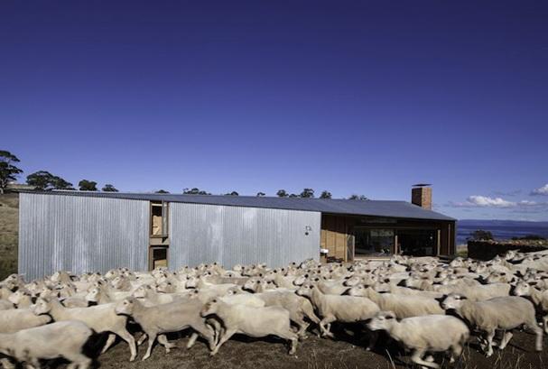 6-Sheep's
