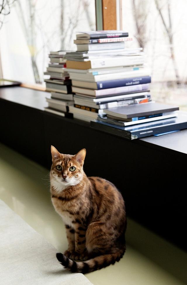 2-beautiful cat