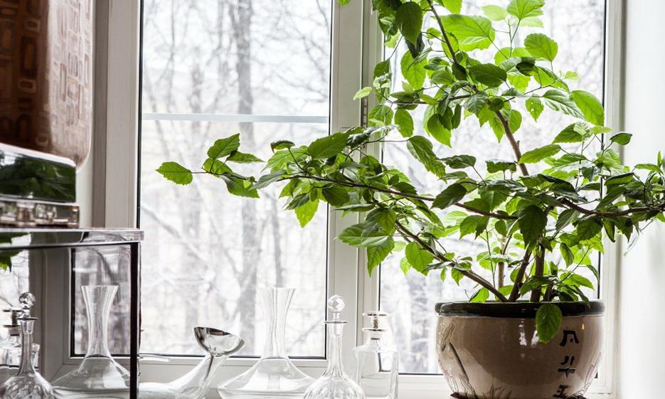25-plant