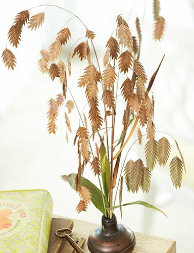8-olfrdst plants