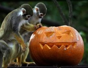 Halloween for wild and domestic animals