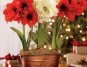 7 Indoor Plants That Bloom in Winter