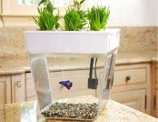 Aquafarm: 2 in 1 – Fish & Herbs