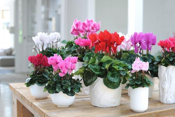 Весенние комнатные цветы