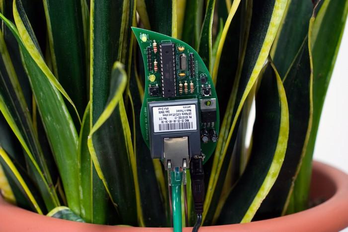 17-smart-home-garden-device-botanicalls