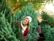 How to Pick a Christmas Tree?
