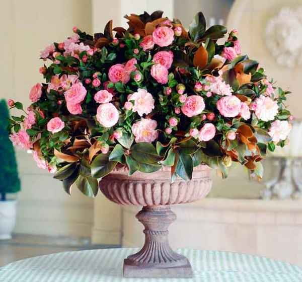 23-winter-blooming-indoor-flower-Japanese-Camellia
