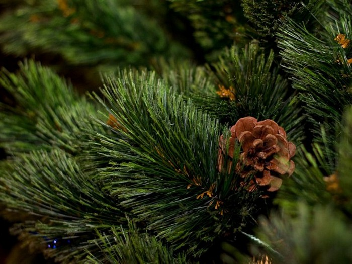3-christmas-tree-spruce-branch-pine
