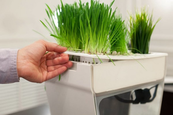 4-aquafarm-hydroponic-eco-system-for-indoor-herbs