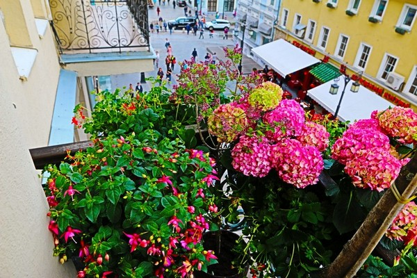 4-beautiful-balcony-blooming-pink-flowers