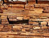 Dry Rot in Your Home? Keep Calm and Read On