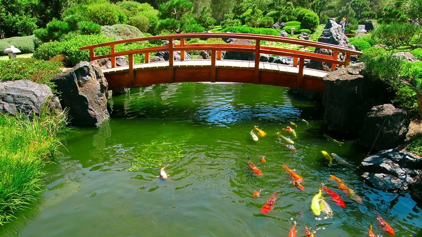 1-3-beautiful-Japanese-garden-koi-pond-bridge