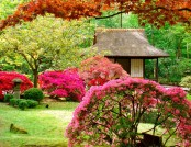 How to Arrange a Japanese Garden: Choosing the Right Plants