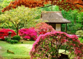 1-Japanese-garden-plants-gazebo-pink-blossom-shrub-maple