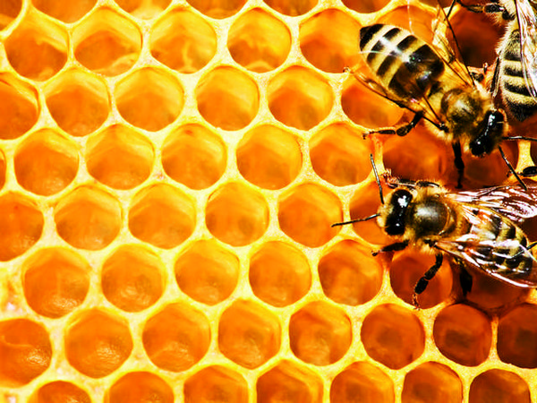 1-bees-in-honeycombs