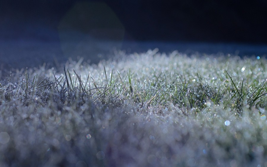 1-winter-grass-lawn-ice-snow-frost
