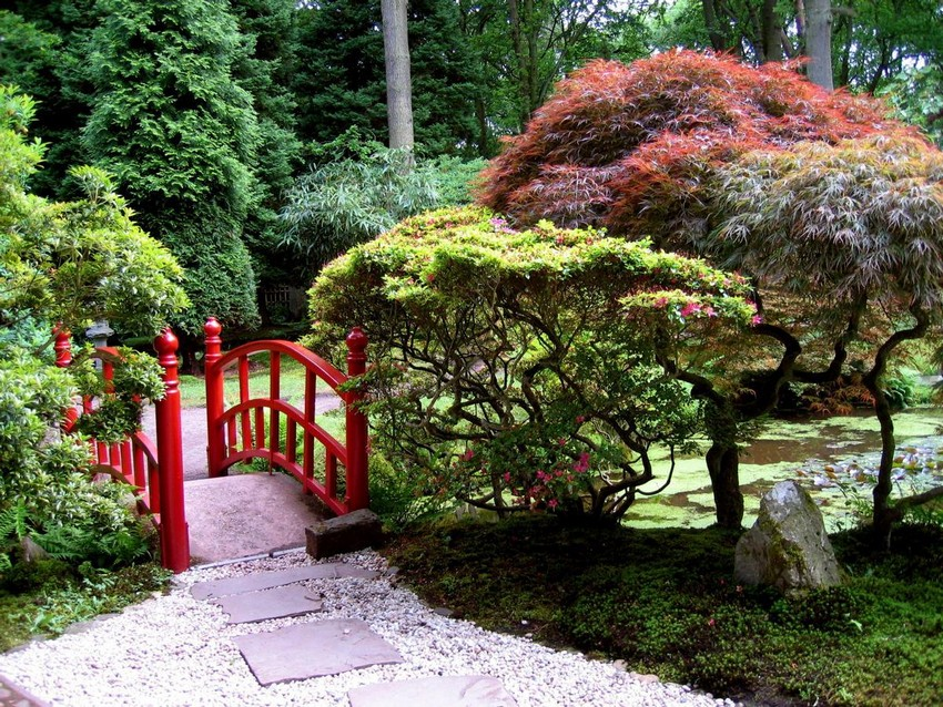 6-1-Japanese-garden-plants-conifers-bridge-pond
