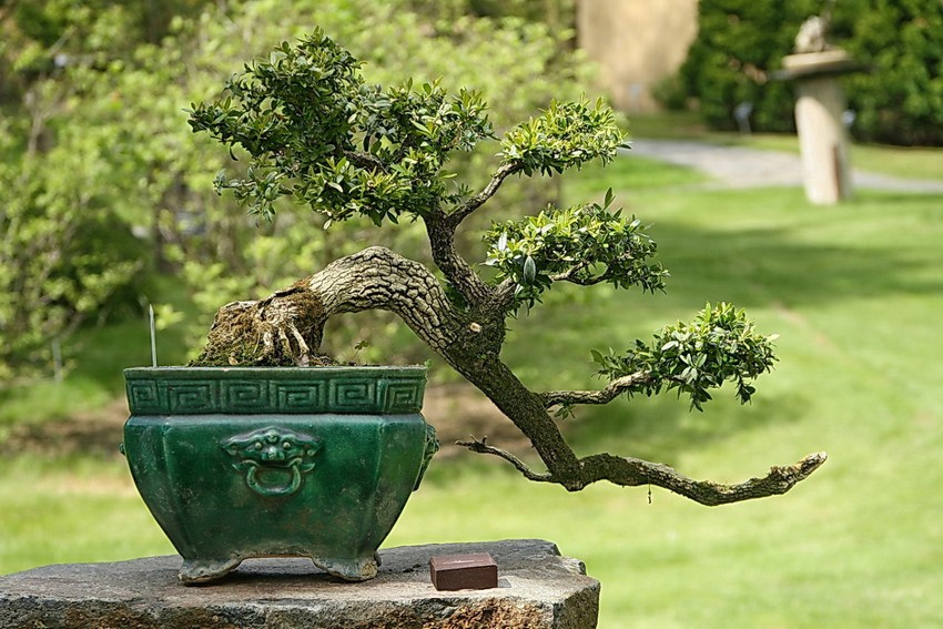 7-3-Japanese-garden-plants-bonsai