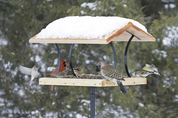 7-birds-feeder-in-garden-in-winter