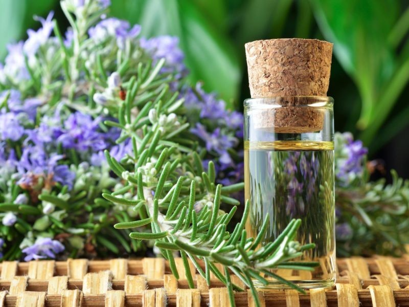 7-rosemary-aroma-scent-flavor