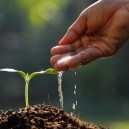0-healty-sound-seedling-young-plant-shoot-watering-from-hand-soil