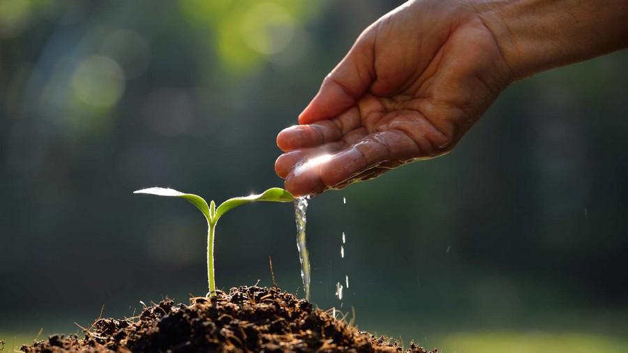 Best Natural Light For Plants