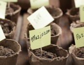 How to Grow Plants from Seed: Guide on Seedlings (Part 2)