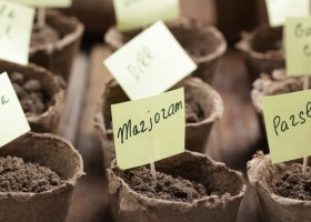 0-how-to-grow-plants-herbs-from-seed-peat-cups-labeled-sticky-notes-toothpicks
