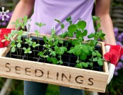 How to Grow Plants from Seed: Guide on Seedlings (Part 1)