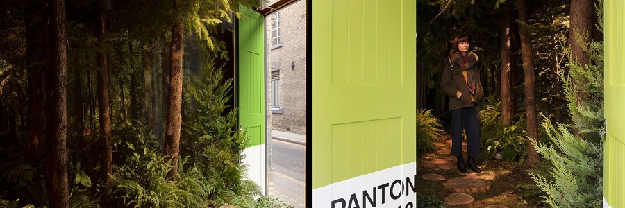 2-green-eco-naturalistic-style-house-for-rent-by-Pantone-Airbnb-London-greenery-potted-plants-trees-entry-room-interior-design
