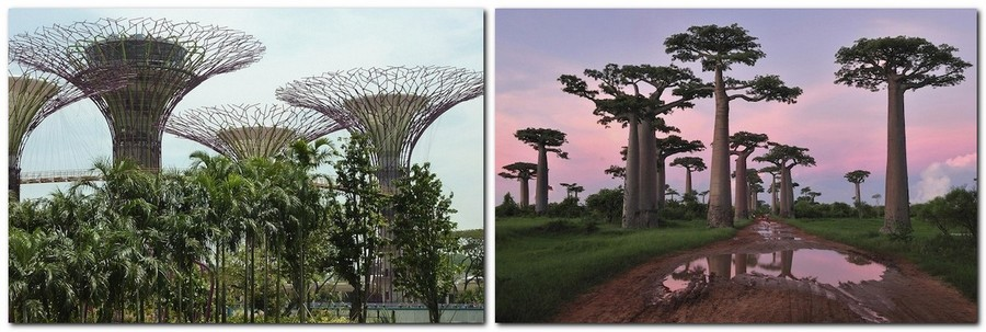 4-Gardens-by-the-bay-park-singapore-biomimicry-in-modern-architecture-futuristic-hi-tech-trees