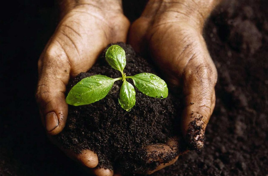 4-seedling-plant-in-soil-human's-hands