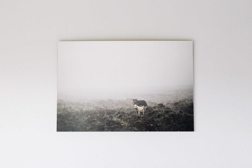 6-5-minimalist-style-white-walls-black-and-white-photo-dogs-in-the-field-fog