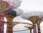 Biomimicry & Design: Lotus Building & Super-Trees of Singapore