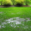0-drainage-problem-waterlogged-lawn-clay-soil-puddles