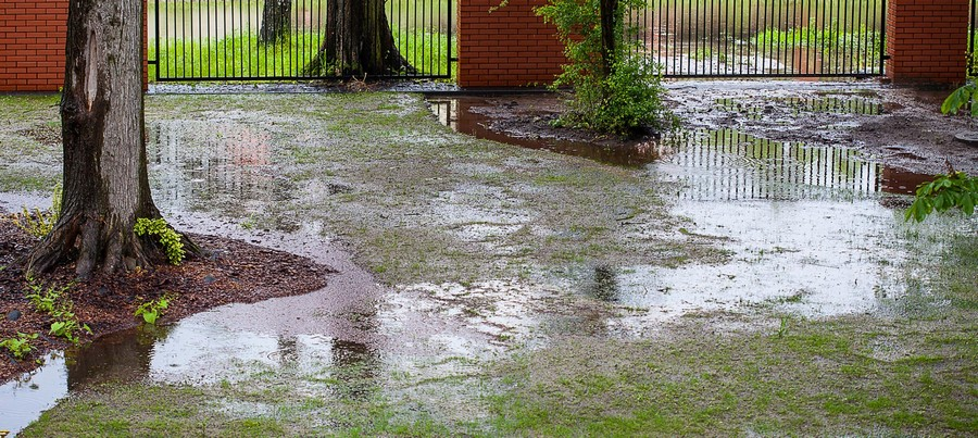 1-drainage-problem-waterlogged-lawn-clay-soil-puddles