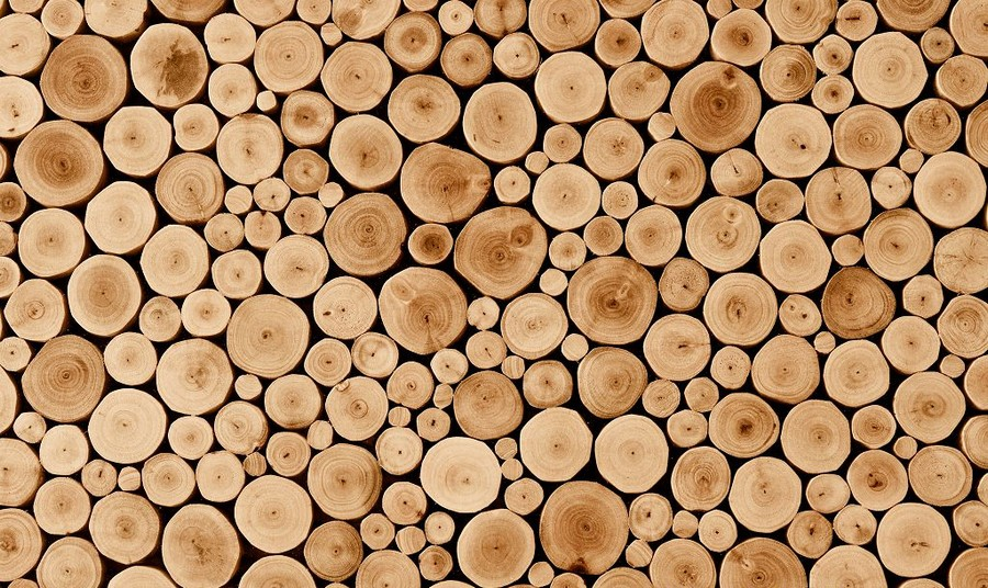 0-tree-wood-cross-sections-cuts