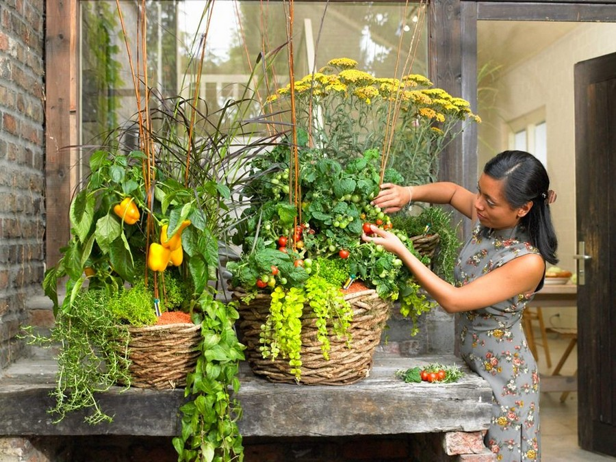 10 Vegetables That Can Be Grown On The Balcony Home Interior
