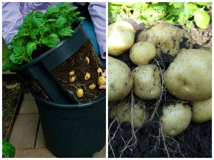 7-1-special-double-pot-bucket-containter-for-growing-potatoes-with-holes