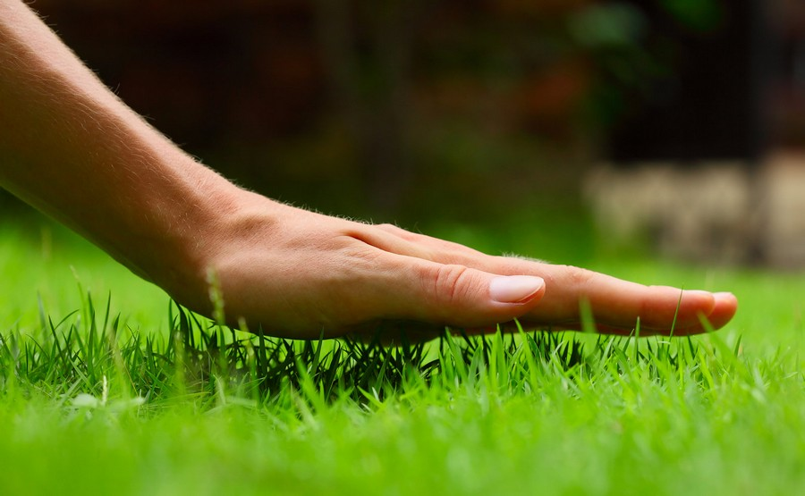 0-beautiful-green-lawn-grass-woman's-hand-touching