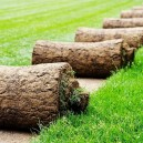1-turf-lawn-rolls-grass-green