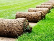 Laying Turf Lawn: All Pros and Cons